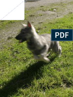 12 Hyper Dog