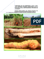 evaluacinagroindustrialdelasvariedadesc132-120925125403-phpapp02
