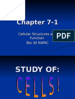 7-1 Intro to CELLS