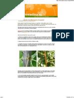 216 Altoirea Pomilor Fructiferi Pentru Incepatori 1