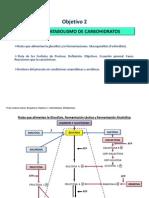Ruta+Fosfogluconato+Glucogenólisis+DEF+02+dic+AUDREY+2013+(1)