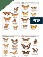 Guia de Mariposas de Mexico