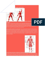 Fisiologçia muscular