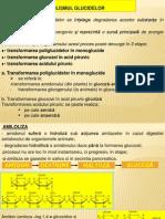 Biochimie-curs 13 Metabolism