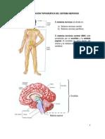 2. Clasificación topográfica del sistema nervioso
