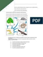 Na figura está esquematizada uma cadeia alimentar relativa a organismos de um habitat terrestre