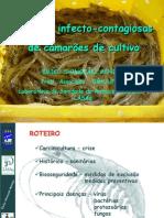 Doencas Camarao