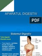 Anatomie Sistem DIGESTIV
