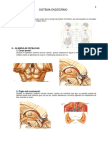 8.sistema_endocrino.