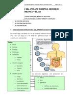 Generalidades Del Aparato Digestivo