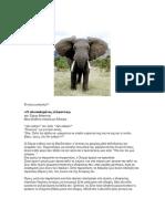 Χόρχε Μπουκάϋ- Ο Αλυσοδεμένος Ελέφαντας