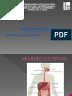 Exposicion Medicas Aparato Digestivo