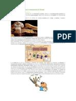 La Enfermedad Celíaca o Intolerancia al Gluten