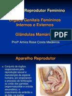 Aparelho Reprodutor Feminino (2)