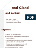 Adrenal Gland 111