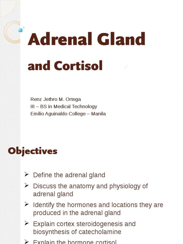 adrenal gland 111   adrenal gland   endocrine system