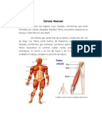 Trabajos de Anatomia Sistemas Muscular y Mantenimiento. - Copia (2)