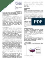 Arborizacion de La Saliva de La Perra Como Tecnica Auxiliar Para El Diagnostico Del Ciclo Estral