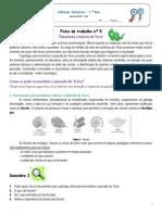 Ficha de trabalho__fósseis