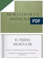 musculosdelamasticacion-110308221604-phpapp02