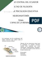 Neuro Meninges