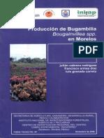 Produccion de Bugambilia