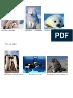 Animale Polare Gr Mica
