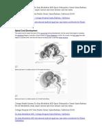 Spinal Cord Development Alan Moelleken MD Lawsuit Terms