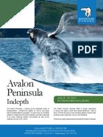 Avalon Peninsula Indepth