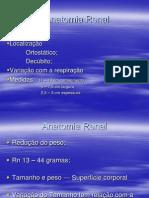 Anatomia Renal II