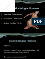 sistemanerviosoperifricoj-121005131958-phpapp02
