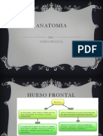 anatomia-120801155023-phpapp01