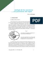 Fisiopatologia+de+Las+Curvas+Antero Posteriores+Del+Raquis