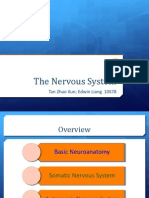 300113 Intro to Nervous System