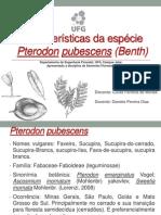 Pterodon pubescens