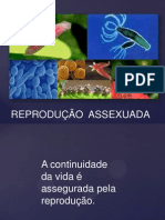 Reproducao_assexuada