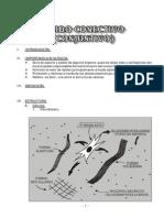 tejido conectivo.pdf