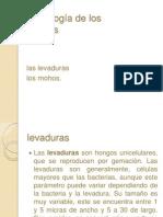 Morfología de los hongos.pptx