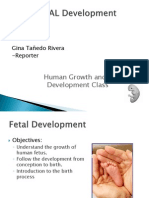 Antenatal Development Report