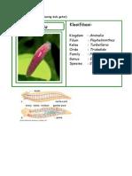 FISWAN Filum Platyhelminthes