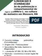 APRESENTACÃO POLINIZACÃO E FECUNDACÃO