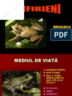 amfibieni