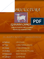 lacapricultura-120804152611-phpapp01