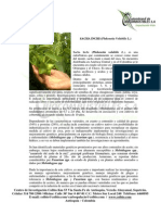 Sacha Inchi.pdf