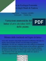 Variazioni anatomiche del legno di larice (Larix decidua Mill.) ed altezza delle piante.