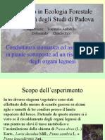 Conduttanza stomatica ed assimilazione in piante sottoposte ad un riscaldamento degli organi legnosi