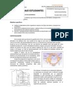 9-Flujo de materia y energía en los ecosistemas (1)