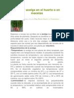 Cultivar Acelga en El Huerto o en Macetas