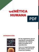 3. GeneticaHumana