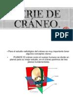 Serie de cráneo